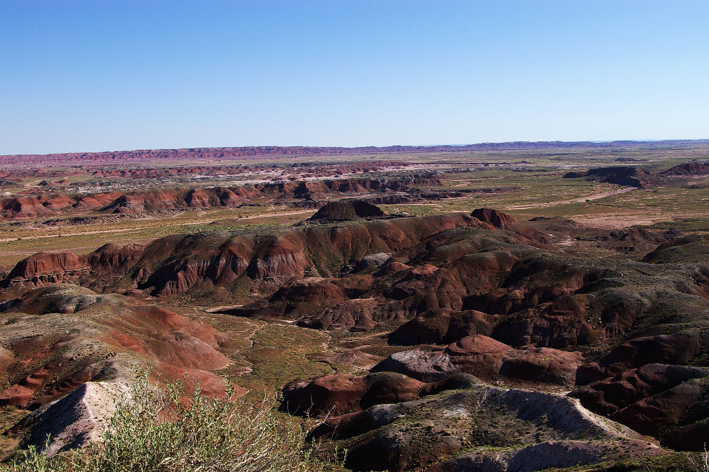 066-2005-petrified-forest.jpg