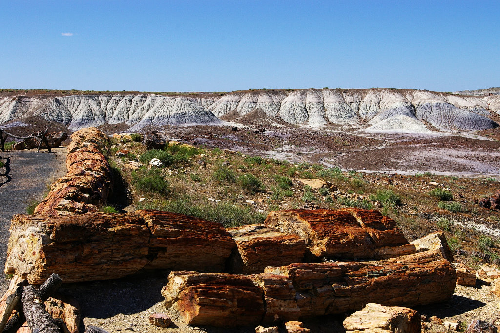 067-2005-petrified-forest.jpg